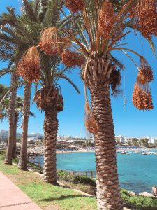 Fig Tree Bay Boardwalk with date trees