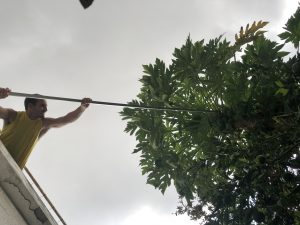 Me picking Papaya from the roof